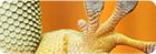 Bild der Pfote eines Chamäleons mit Lamellenstruktur sichtbar